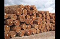 TradeGuide24.com - African Hardwood Timber Logs