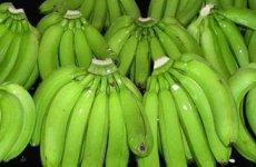 TradeGuide24.com - Fresh Cavendish Banana