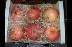 stocklot - FRUITS & VEGETABLES FROM MOROCCO
