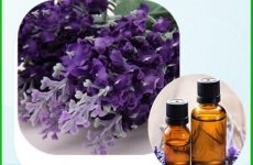 stocklot - Lavender Essential Oil